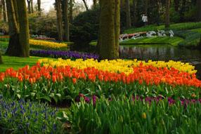 Keukenhof Gardens Lisse